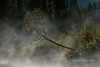 Leaning tree in the morning mist, Mitchell River, Cariboo-Chilcotin, British Columbia