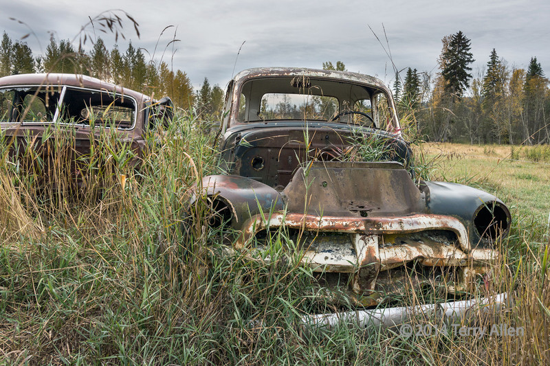 Old Chevy truck and car in tall grass near Likely, British Columbia