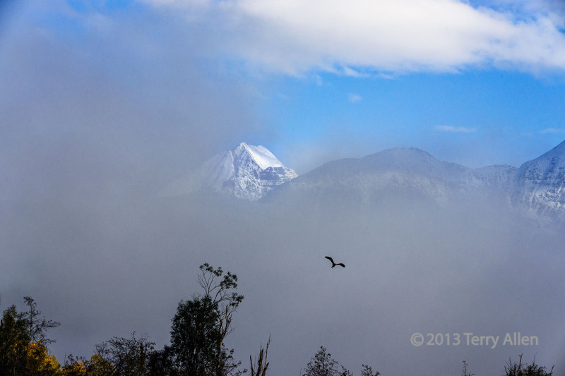 Snow peak with mists and flyling heron, Cariboo-Chillcotin region, British Columbia