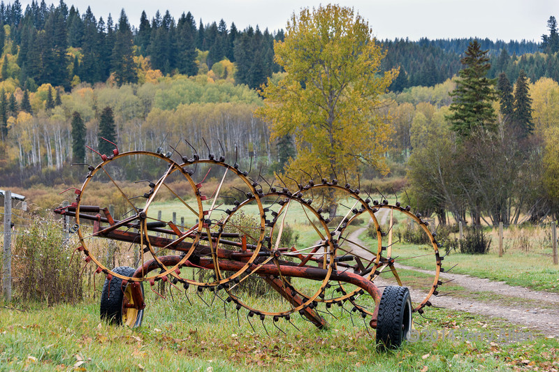"""Antique star wheel hay rake, with fall colours, near Likely, British Columbia (used to collect cut hay or straw into windrows)<br /> <br /> Other photos of antique farm machinery (10 disk plow, rock picker), hay bales in an old barn, and abandoned old cars can be seen here: <a href=""""http://goo.gl/2tGGSL"""">http://goo.gl/2tGGSL</a><br /> <br /> 18/1/14  <a href=""""http://www.allenfotowild.com"""">http://www.allenfotowild.com</a>"""