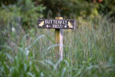 Butterfly Pass is one of the choices for visitors to hike at Parkville Nature Sanctuary.