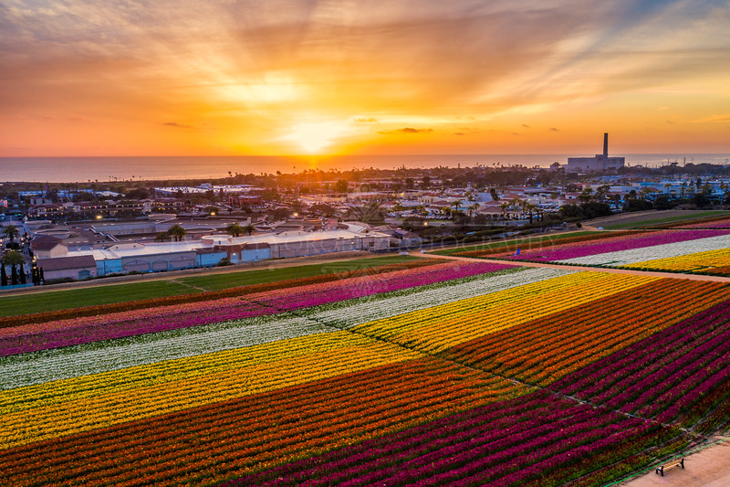 """The Flower Fields"""