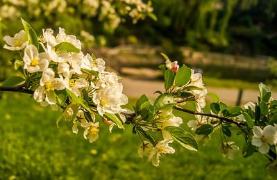 2014-05-27_Edward_Gardens_008