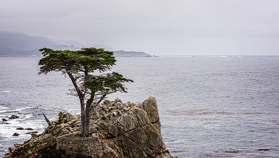 Lone Cypress, Pebble Beach
