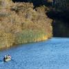 Carmel River Habitat