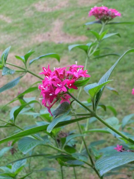 flowers at La Quinta Primavera<br /> photo by Tara Kolker