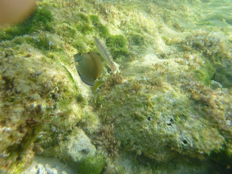 Second day of snorkeling.  Shallow water.