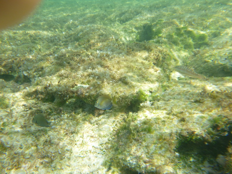 Second day of snorkeling - Princess Cay