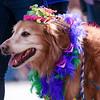 2020 Mardi Gras - Beggin Pet Parade - St. Louis
