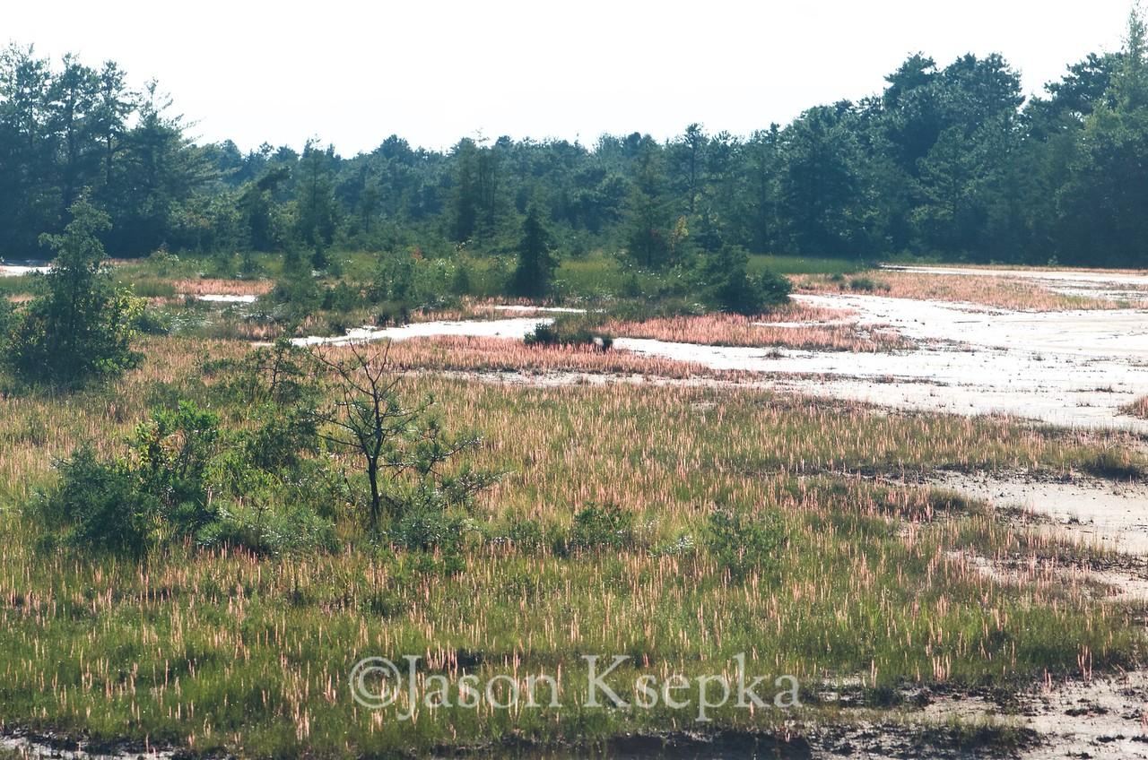 Drosera filiformis, Thread-leaf Sundew; Ocean County, New Jersey 2015-08-07   4