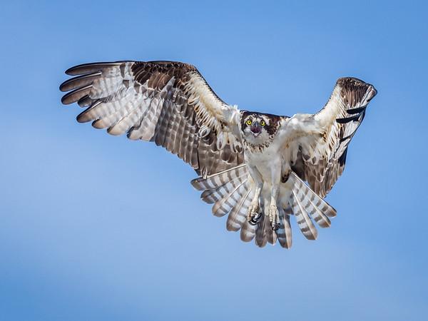 osprey takeoff