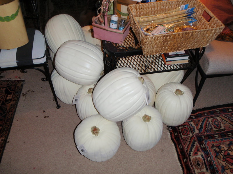 Naked pumpkins that will become Cinderella carriages!