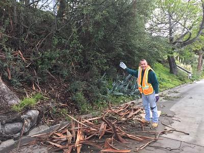 Richard doing a fine job, clearing out the eucalyptus bark detritus!