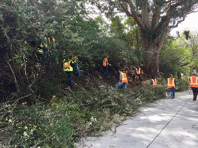 Really making a dent in the overgrown shrubbery. Many hands makes light work!