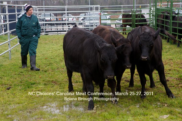 Low-Stress Cattle Handling Operation