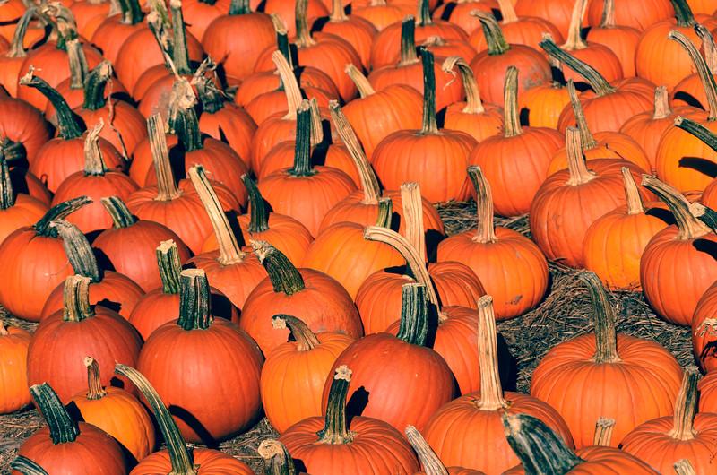 October Dream
