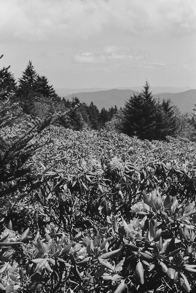 NC, Smokey Mountains, June 2012, R2M Tri-X 800