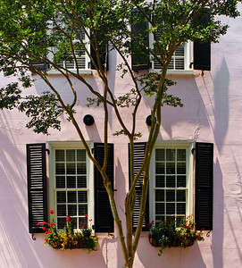 """' Tree on Pink ' Charleston, SC  12""""x16"""", Luster paper (12 mil) limited edition of 50"""