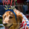 Sean Vannatta's dog Gracie is dressed for the occasion at the Chautauqua Community Band 25th Annual Independence Day Concert at 12:15 PM on July 4, 2016, on Bestor Plaza. Many dogs (as well as their owners) sported red, white, and blue at the concert. Photo by Carolyn Brown.