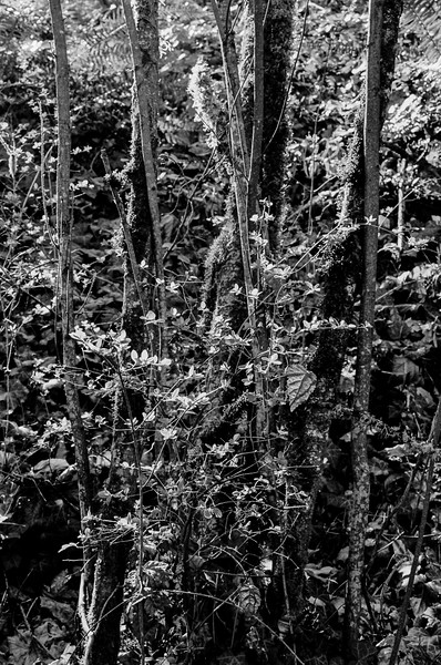 Spring 3. Since we have one other black and white photo in winter, I offer this one taken along the trail in Champoeg state park.