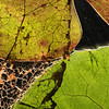 Fall 4. Please replace the leaf photo with the complete leafs with this close-up. It is not connected to a specific poem.  This could be placed in a different order/location.