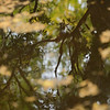 "Summer 5. This should go near the poem: ""Rippling reflections: / green maple leaves, black branches, / blue sky, upside down.?"