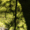 "Winter 5. To go near the the ""chartreuse moss"" poem. Please note that the photo was reversed in the rough draft and should be rotated."