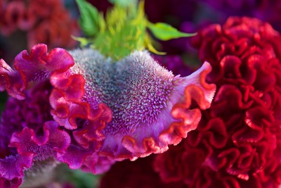 Alex and Betsy's flowers remind me of coral