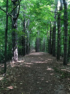 Bayview Trail in the woods