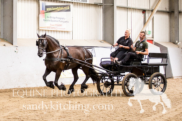 Carriage driving lessons 2016