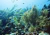Reefs of Bonaire