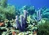 Bonaire reefs, May 2013