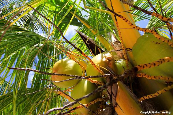 Nuts Grand Bahama