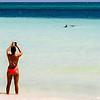 Grand Bahama, sharks