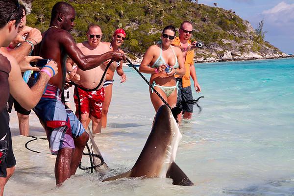 Feeding the sharks