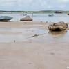 Low tide in Harbour Island, Bahama