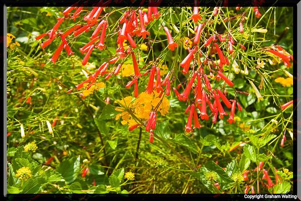 Flowers Grand Bahama