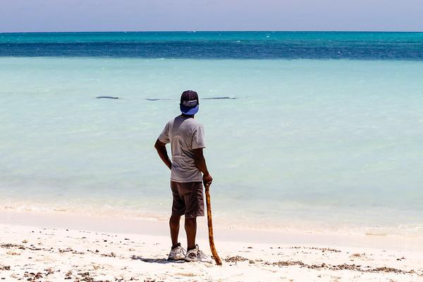 Grand Bahama, Shark Watch
