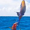Hooked, Bahama