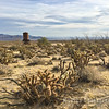 Jumping Cholla and RR water tank