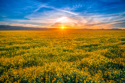 Carrizo Plain National Monument Wildflowers Superbloom Spring Symphony #10!  Elliot McGucken Fine Art Landscape Nature Photography Prints & Luxury Wall Art