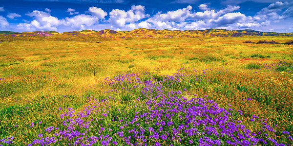 Carrizo Plain National Monument Wildflowers Superbloom Spring Symphony #5!  Elliot McGucken Fine Art Landscape Nature Photography Prints & Luxury Wall Art