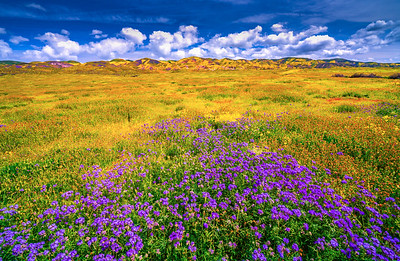 Carrizo Plain National Monument Wildflowers Superbloom Spring Symphony #6!  Elliot McGucken Fine Art Landscape Nature Photography Prints & Luxury Wall Art