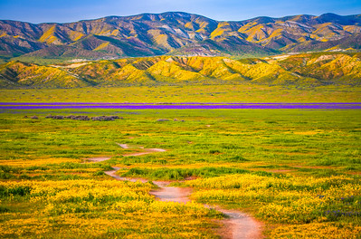 Carrizo Plain National Monument Wildflowers Superbloom Spring Symphony 34!  Elliot McGucken Fine Art Landscape Nature Photography Prints & Luxury Wall Art