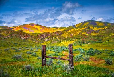 Carrizo Plain National Monument Wildflowers Superbloom Spring Symphony 19!  Elliot McGucken Fine Art Landscape Nature Photography Prints & Luxury Wall Art