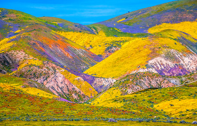 Carrizo Plain National Monument Wildflowers Superbloom Spring Symphony 24!  Elliot McGucken Fine Art Landscape Nature Photography Prints & Luxury Wall Art