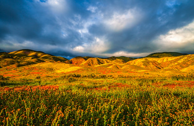 Carrizo Plain National Monument Wildflowers Superbloom Spring Symphony #7!  Elliot McGucken Fine Art Landscape Nature Photography Prints & Luxury Wall Art