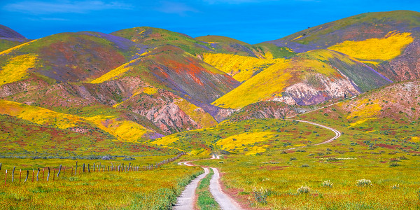 Carrizo Plain National Monument Wildflowers Superbloom Spring Symphony 27!  Elliot McGucken Fine Art Landscape Nature Photography Prints & Luxury Wall Art