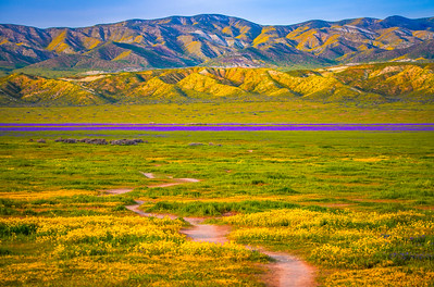 Carrizo Plain National Monument Wildflowers Superbloom Spring Symphony 35!  Elliot McGucken Fine Art Landscape Nature Photography Prints & Luxury Wall Art