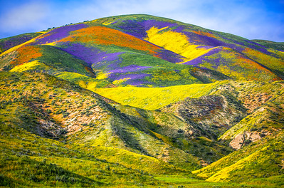 Spring Symphony #2: Carrizo Plain Superbloom California Fine Art Landscape Nature Photography Prints & Wall Art